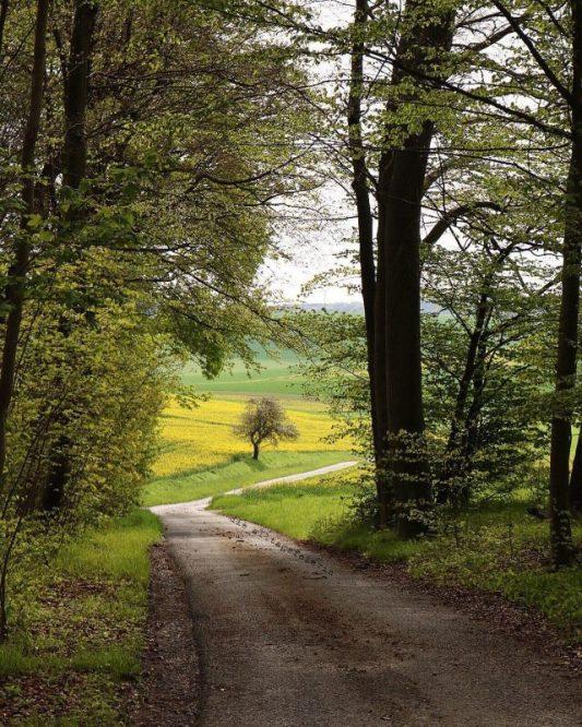 Wald, walken, Natur, Naturfotografie, Liebster Award, Blogger Award