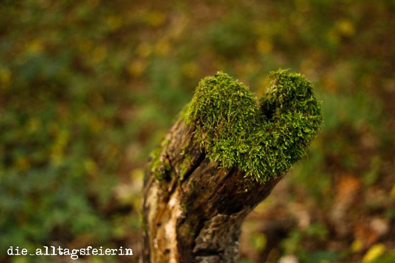 Wochenglueckrueckblick 081017, Wald, Naturfotografie, Herz, Moosherz