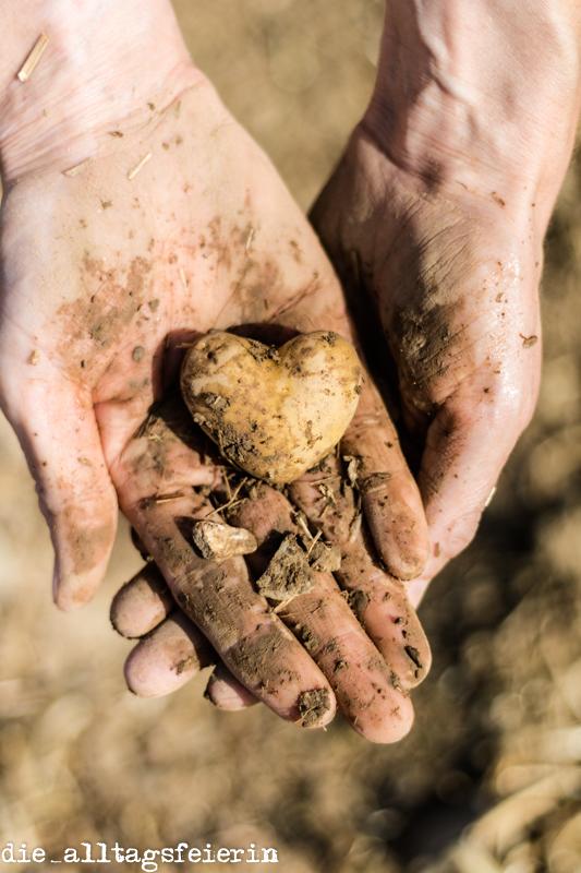 Herzlich willkommen auf diealltagsfeierin.de, Herz-Kartoffel, Fotodesignerin Bettina Höchsmann