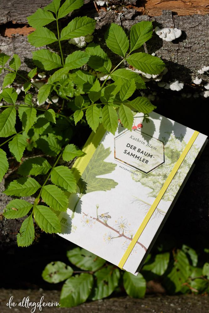 """Wildnispädagogin und Autorin Kathrin Blum, Rezension Buch """"Der Baumsammler"""" vom Rowohlt Hundert Augen Verlag"""