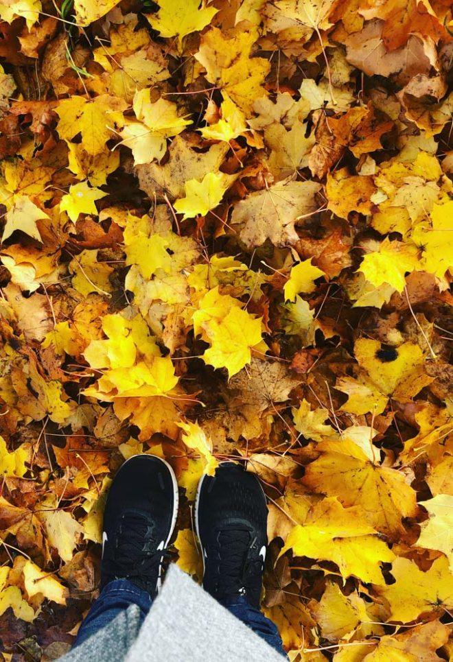 ToLove Bucket-Liste: Herbstspaziergang, Ideen für einen festlichen Herbst. Christina von meinpusteblumengarten.de