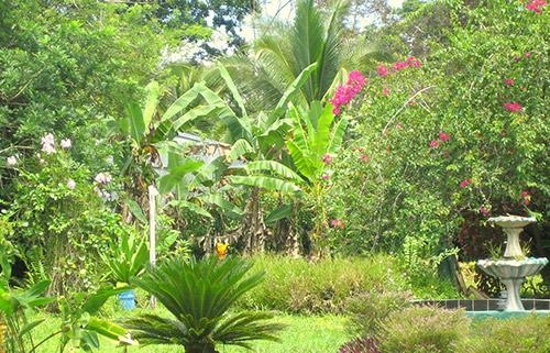 Garten des Cahuita Hotel Hostel Appartement