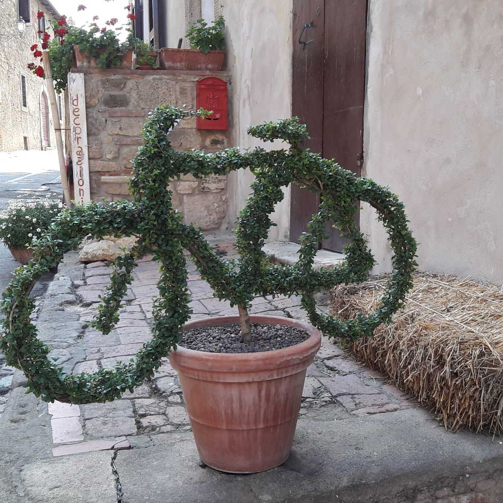 Bolgheri, Toskana
