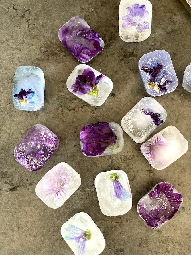 Eiswürfel mit MalvenblütenMalvenblüten-Infusion, Malvenblüteneiswürfel, schöne Dekoration für Cocktails. Susan Labsalliebe.com