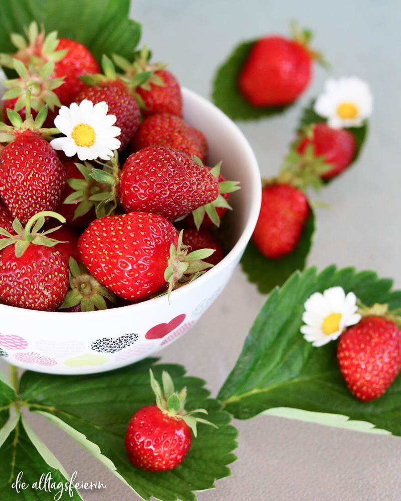 Erdbeeren, säen und ernten mit Fidi von dunkelrot.de