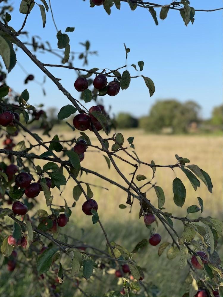 Vom Säen und Ernten, Gastartikel von Christina Meinpusteblumengarten.de - Herbstimpressionen